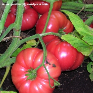 the garden grrl talks about pruning tomatoes