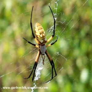 leave-your-garden-spiders-alone